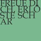 DVD-Cover, Titeltext auf grünem Hintergrund